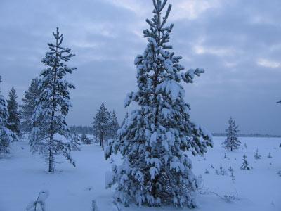 http://sanatatur.ru/forum/images/fisher500/1252fbvdfbgnbg.jpg