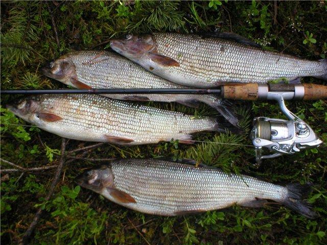 рыбалка на сбирулино основы