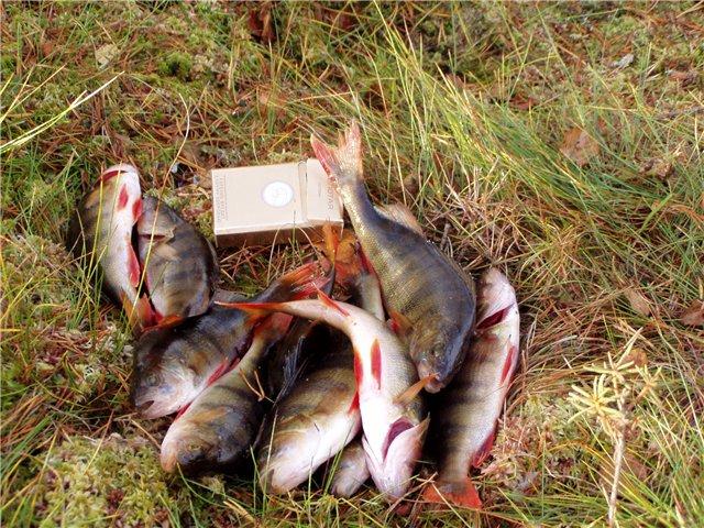 клев рыбы на завтра череповец