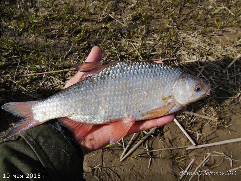 рыбацкая в татарии