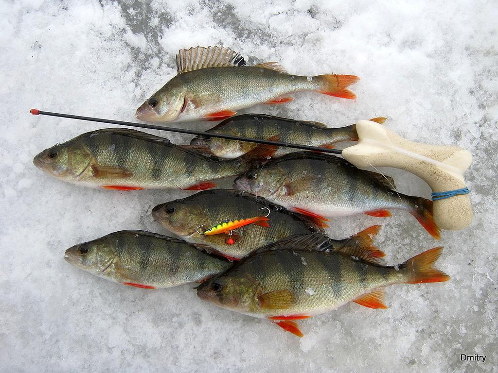 ловля морепродуктов