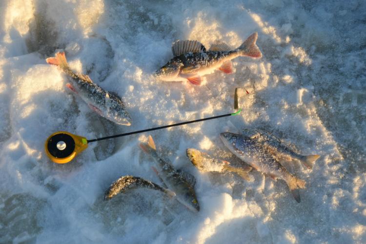 клев рыбы в котласе