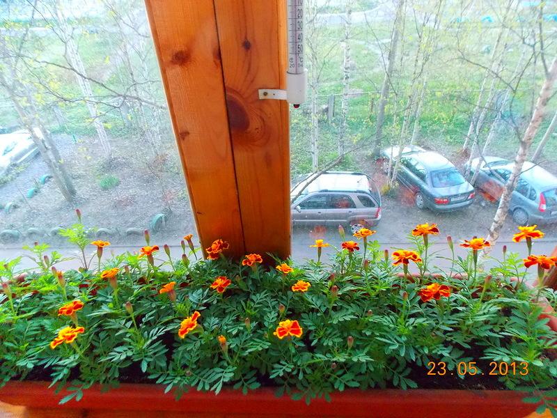 Цветы (фото) - просмотр темы * на севере.