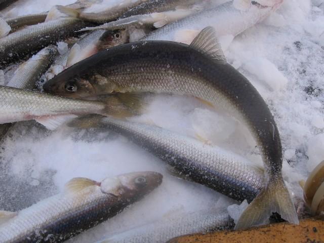 соната тур рыбалка на севере приливы и отливы