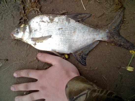 рыбалка в архангельске в городской черте
