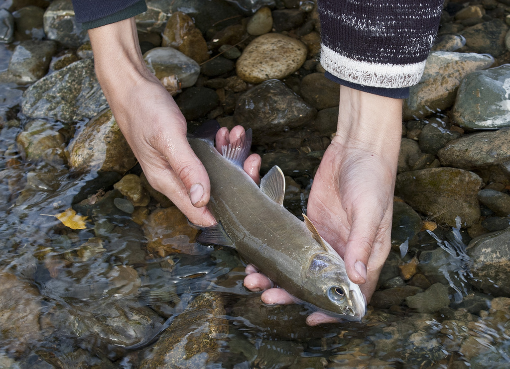 большая рыбалка в кемеровской области на хариуса
