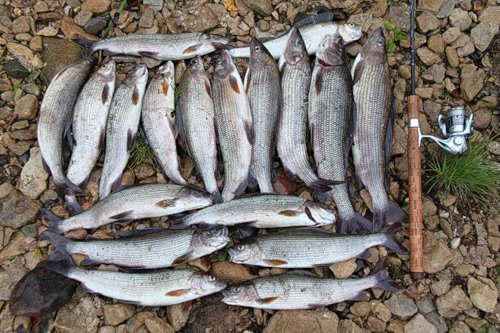 видео рыбалок в арх обл