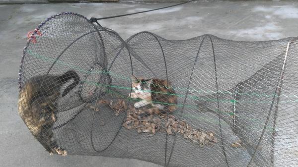 Верша рыболовная как ловить