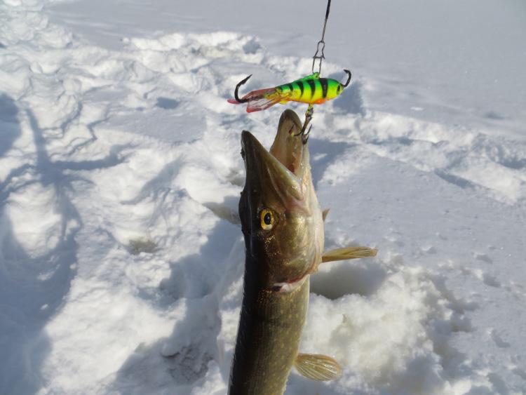 рыбалка щука клюет на щуку