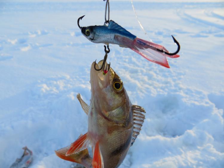 балансирчик рыболовный